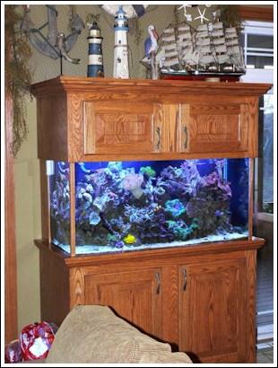 KC Custom Aquatic, Custom Aquariums And Aquarium Maintenance In Kansas City  Owned By Kevin And Carla Lewis